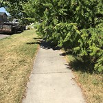 City Owned Tree Concern at 4727 21A ST SW