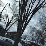 City Owned Tree Concern at 24 FOLEY RD SE