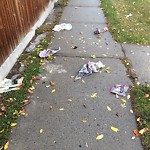 Debris on Street/Sidewalk/Boulevard at 4883 RUNDLEHORN DR NE
